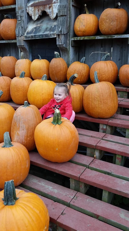 pumpkinfarm(2)
