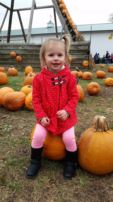pumpkinfarm(4)